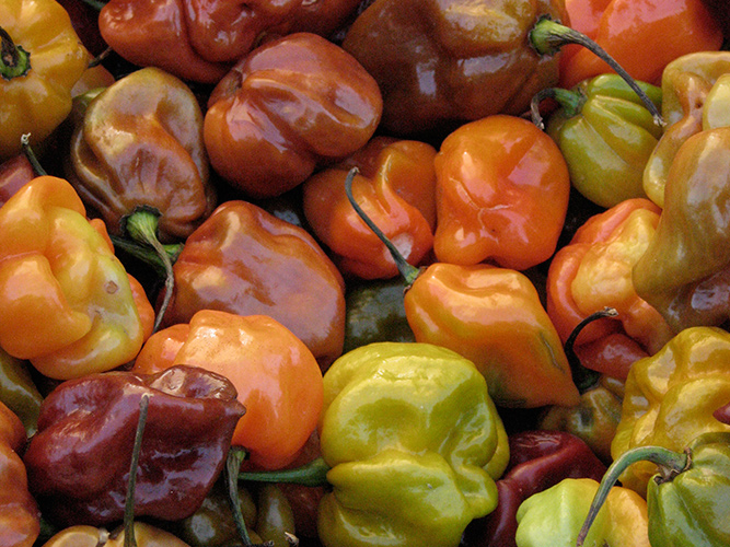 food-peppers-feature
